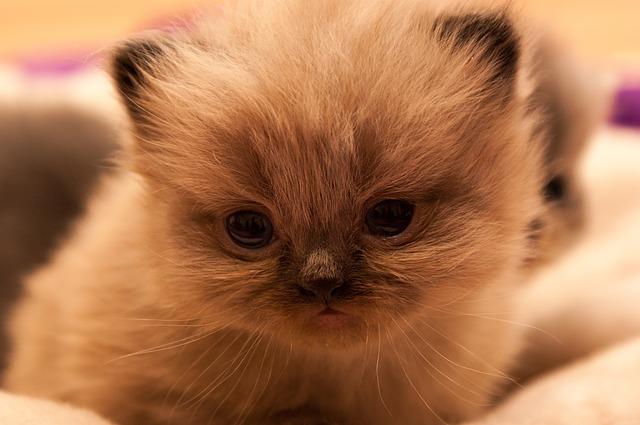 Gambar Kucing Kembar Tidur Berpelukan Youtube Gambar Lucu
