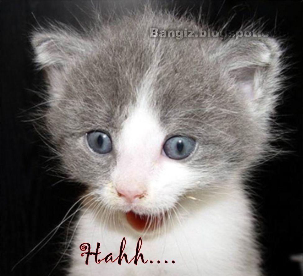 21 Wallpaper Gambar Kucing Dengan Kata Kata Bangiz