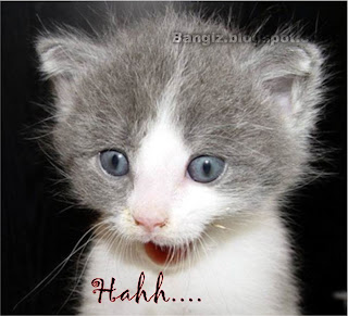 Kucing Lucu terbaru