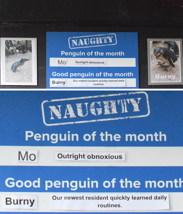 This Aquarium Announced The Naughtiest Penguin Of The Month, And The 'Offenses' Are Hilarious