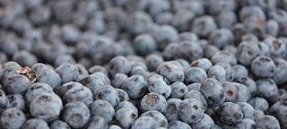 Manfaat Buah Blueberry Untuk Kesihatan