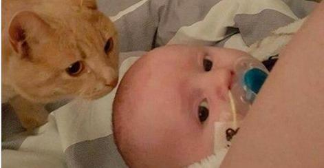 Quand personne ne regarde, ce chat vient se coller au bébé malade. Ce qu'il fait ensuite est extrêmement touchant.