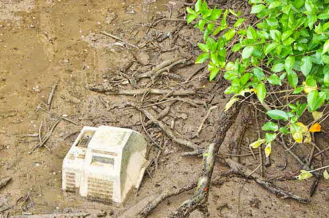 television, discarded, trash, mangrove forest