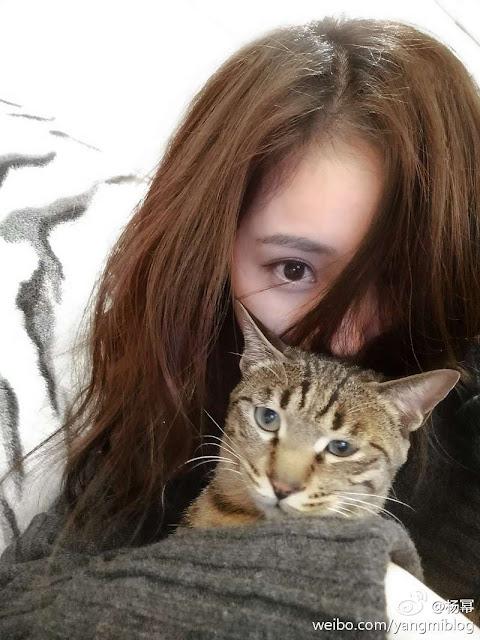 Yang Mi Cat