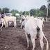 John Dumelo goes into cattle farming