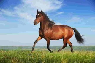 Kegunaan Kuda Untuk Umat Manusia