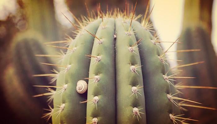 Plagas de cactus