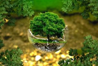 100 Contoh Slogan Lingkungan Hidup Terbaru
