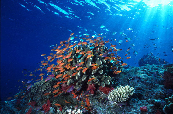 Taman Laut Bunaken Siap Taklukkan UNESCO
