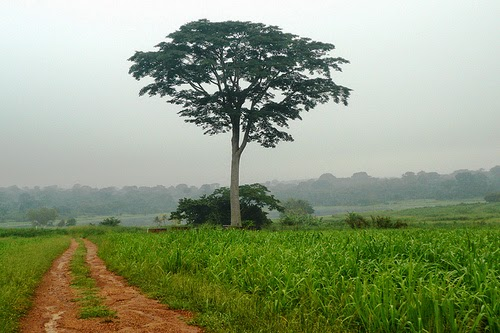 The Iroko Tree African Folktale