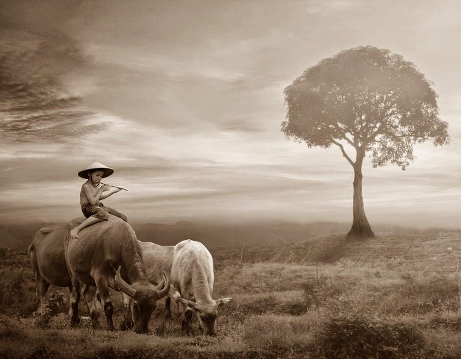Anak Gembala yang Bijaksana