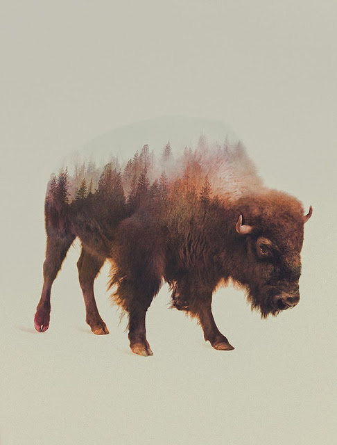 Andreas Lie Buffalo Double Exposure