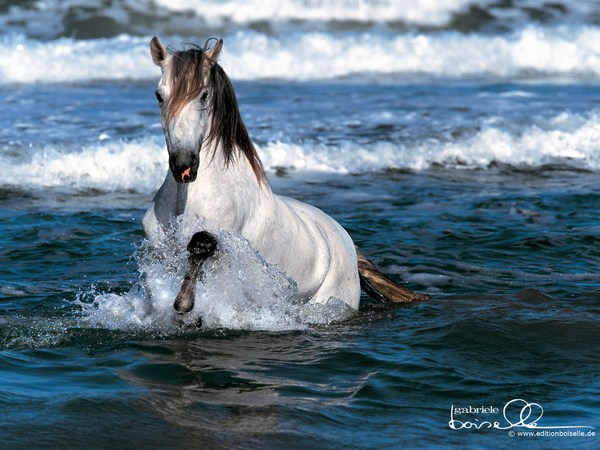 White Horse Images Running in Water
