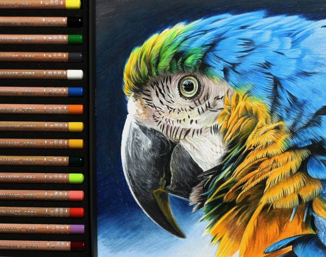 02-Parrot-Jae-Kyung-Domestic-and-Wild-Animals-Pencil-Drawings-www-designstack-co
