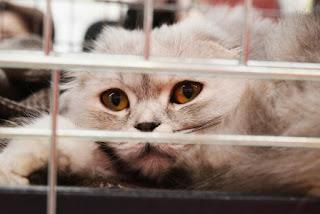 Kenapa Kucing Mengeong Terus di dalam kandang