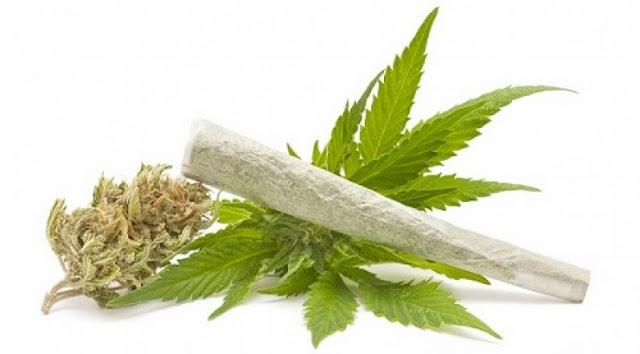 Buongiornolink - Allo Stato conviene legalizzare la Marijuana