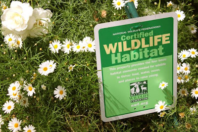 In and Out My Nest: Certified Wildlife Habitat Backyard