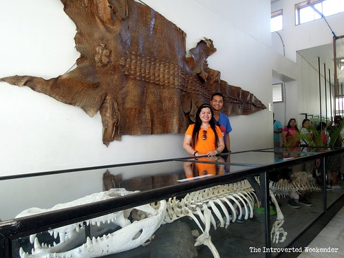 Puerto Princesa Travel Guide: our photo souvenir with the giant crocodile skeleton at the Palawan wildlife and conservation center