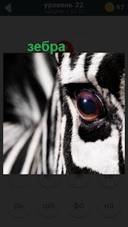 стоит зебра и смотрит одним глазом 22 уровень 470 слов