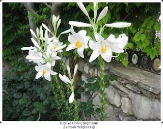 Bitki Yetiştiriciliği   1