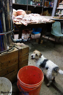 dog seems unaware of meat in the same room of Tuscan farmhouse