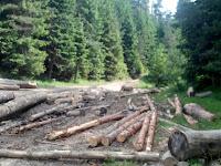 Промишлен добив на дървесина