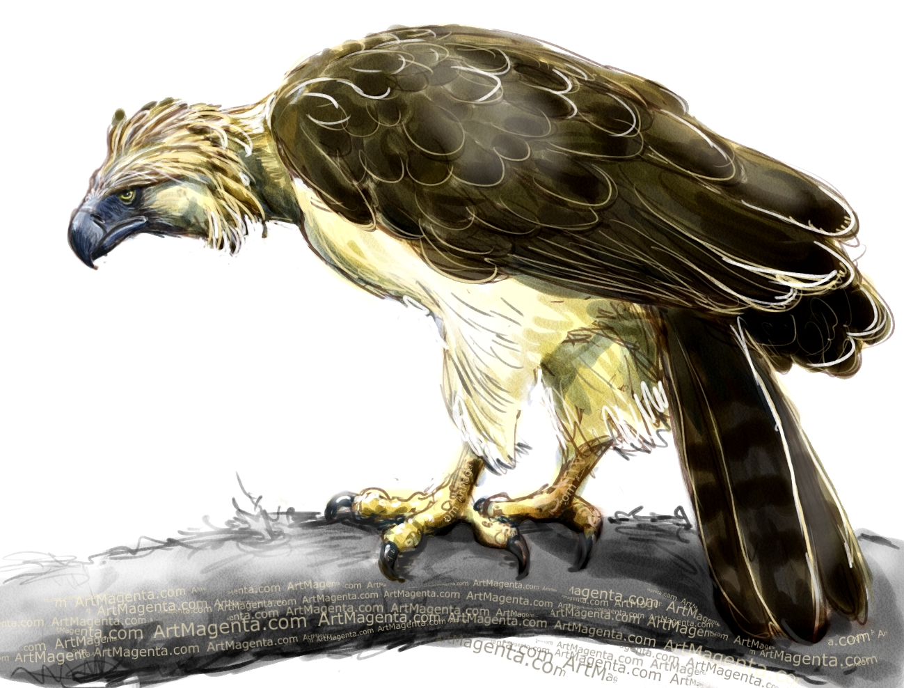 Philippine eagle sketch painting. Bird art drawing by illustrator Artmagenta