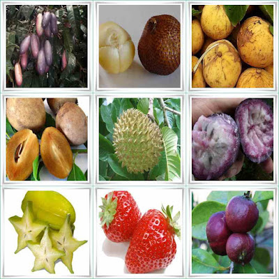 Fruit Names Starting With S