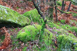 50 nuances de green, Forêt de Fontainebleau