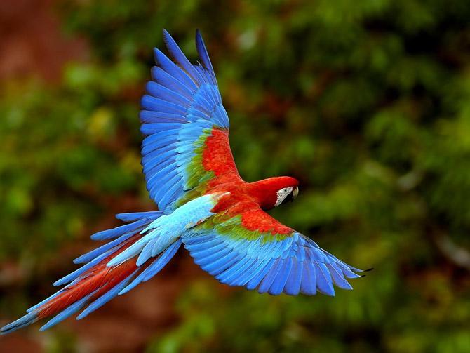 Ambo Upe dan Burung Beo (Cerita Rakyat SulSel)