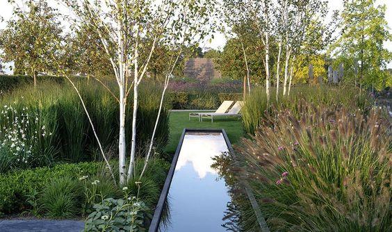 bazin de apa, luciu apa, reflexie, ierburi decorative gradina, graminee tipuri diferite, mesteacan, gradina modernista