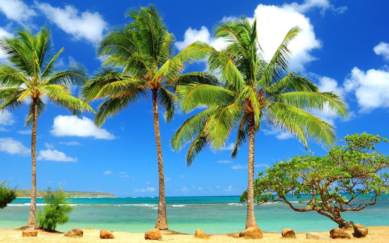 10 Most Popular Beautiful Beach Backgrounds Palm Trees: Palm Tree Wallpapers Hd