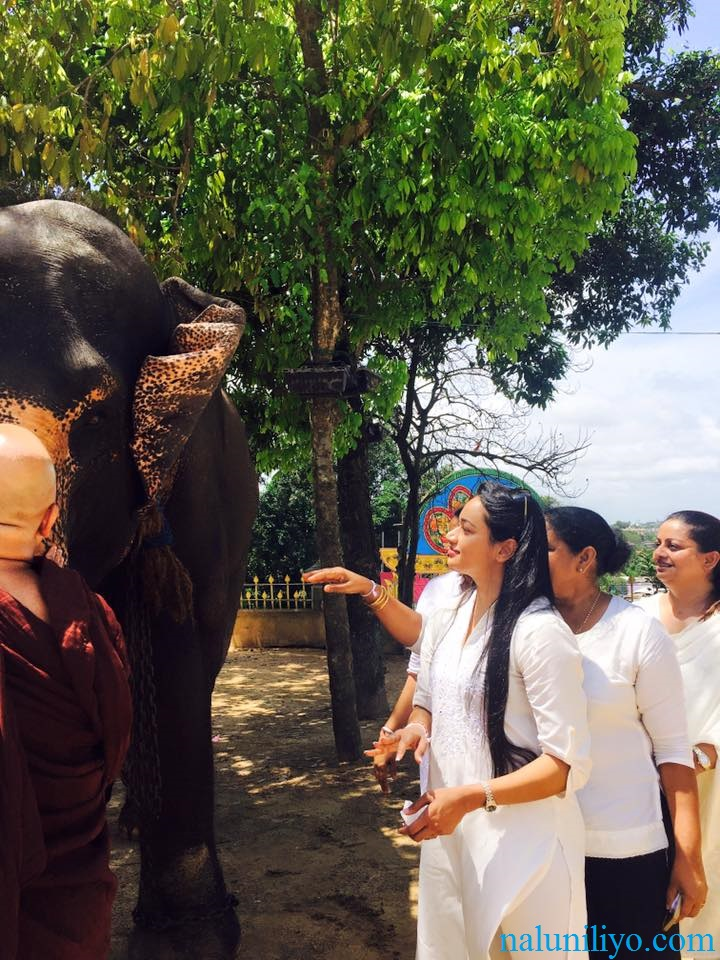 Janaki Wijerathne feeding elephants birthday Uduwe Dhammaloka Thero