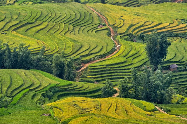Glistering Terraced Fields in Bat Xat, Lao Cai 2