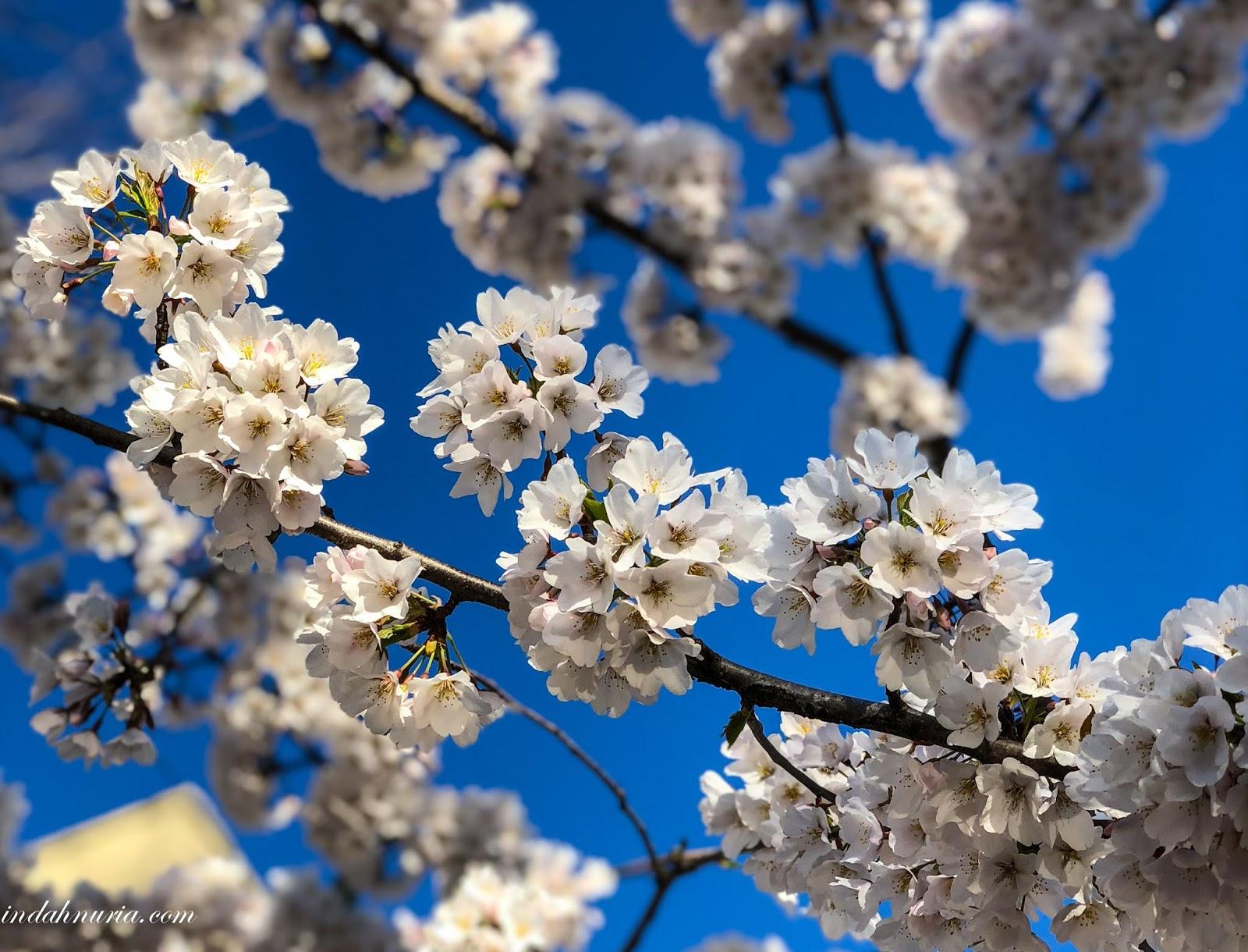 My Purple World Spring In Blue