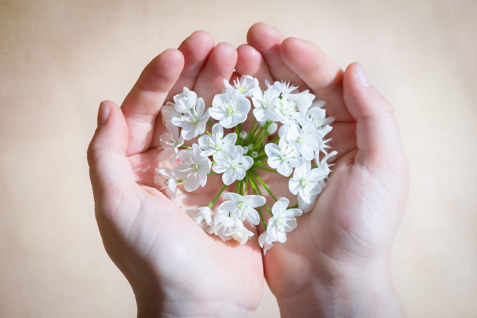 Mãos tumblr, flores, mãos com flores