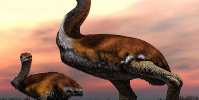 Το μεγαλύτερο πουλί που έζησε ποτέ στη Γη