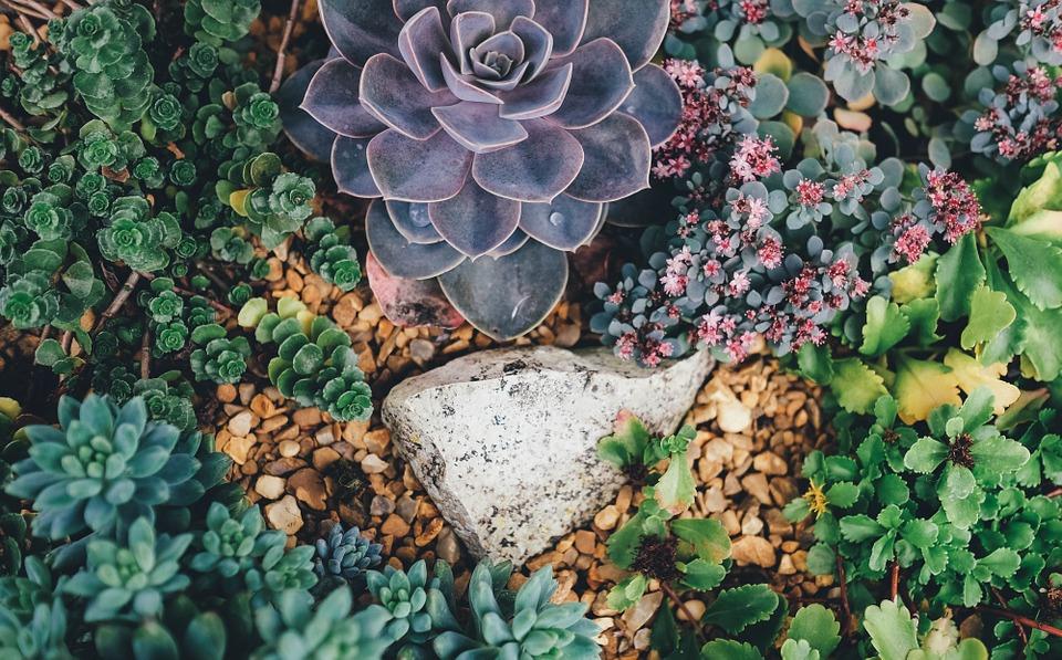 Las 10 Plantas Más Resistentes Al Sol Y Al Calor Amigos De La