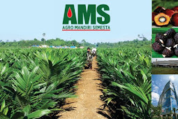 Info Loker Terbaru 2017 Lulusan D3/S1 PT. Agro Mandiri Semesta (AMS) Jakarta