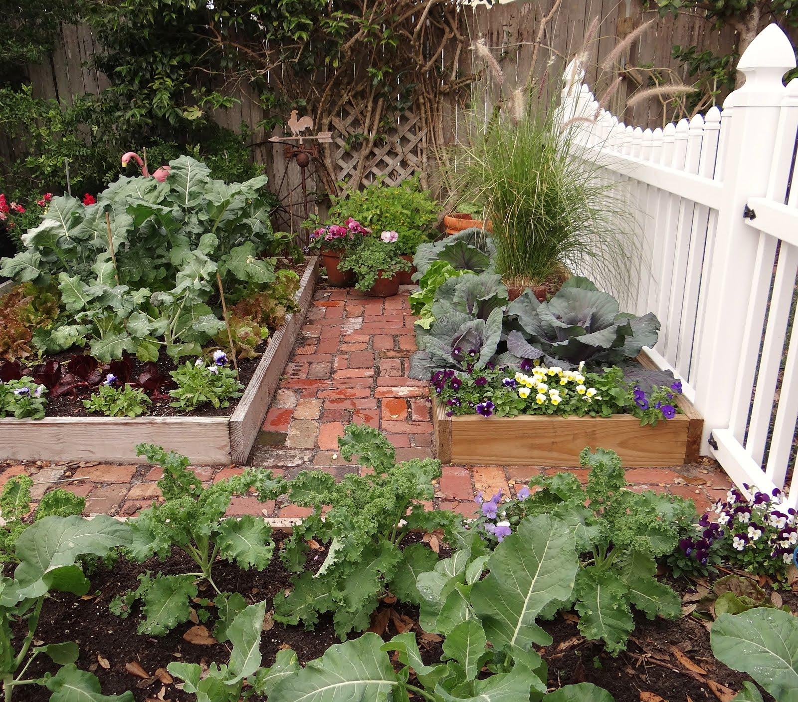 Gardening Under The Florida Sun: The Winter Garden