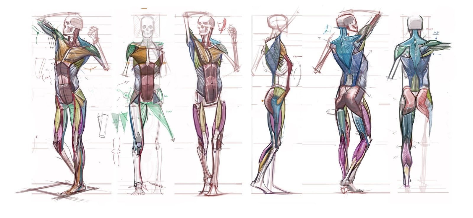 Figuredrawingfo News Anatomy Lecture Notes