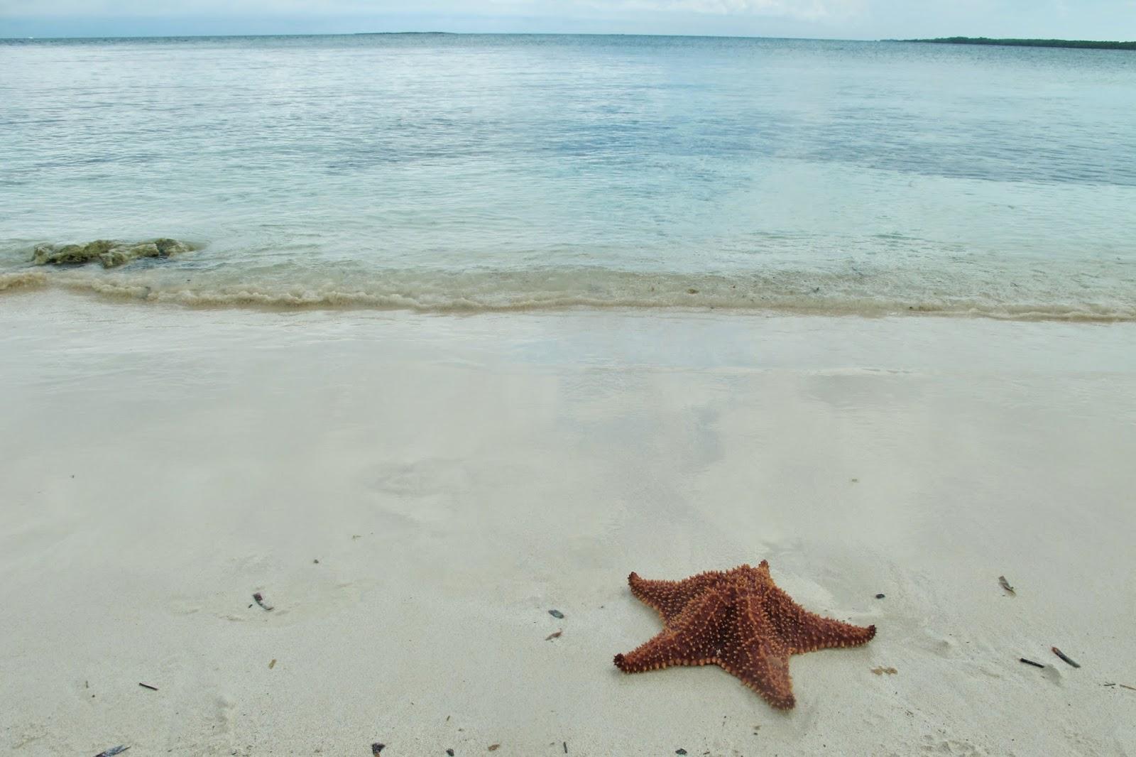 Estrela do mar no Cayo Santa Maria, em Cuba.