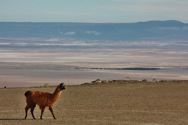 Salar de Atacama visto dos Andes