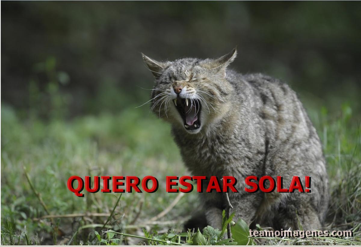 La mejor Imagen de gato diciendo quiero estar sola, teamoimagenes.com