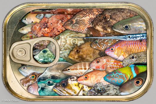 Mick otten google for Google plenty of fish
