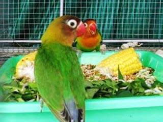 7 Makanan Burung Paling Favorit untuk Burung-burung Pemakan Biji-bijian.