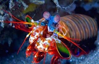 اجمل 10 اسماك ملونة في عالم البحار