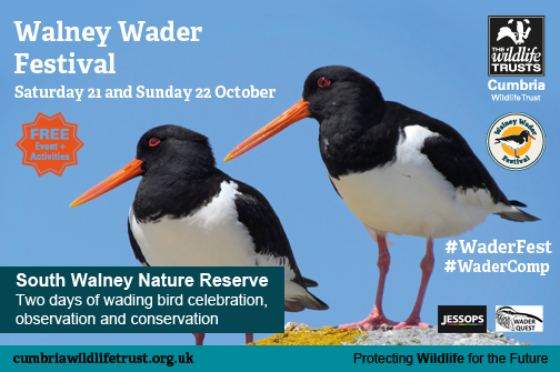 Walney Wader Festival and Scottish Ornithological Club Conference this weekend