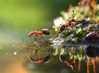 Imágenes hormigas