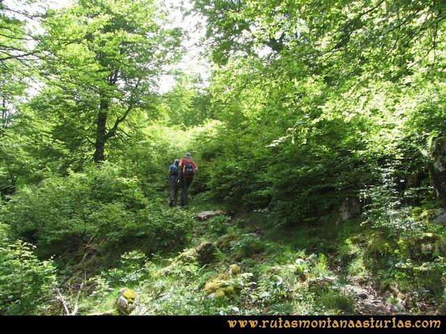 Ruta Tielve Peña Maín: Entrando en el bosque